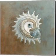 Treasures from the Sea III Fine-Art Print