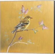 Female Goldfinch on Gold Fine-Art Print