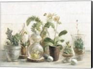 Greenhouse Orchids on Shiplap Fine-Art Print
