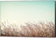 Retro Grass Fine-Art Print