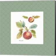 Orchard Bloom IV Border Fine-Art Print
