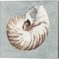 Sand and Seashells I Fine-Art Print