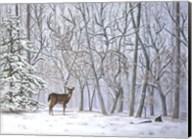 Big Buck Fine-Art Print