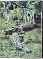 Alligators Fine-Art Print