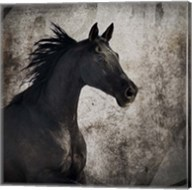 Gypsy Horse Collection V1 4 Fine-Art Print