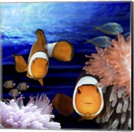 Sea Creatures Clown Fish Fine-Art Print