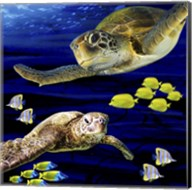 Sea Creatures Turtle Fine-Art Print