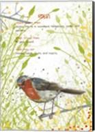 Robin Postcard Fine-Art Print