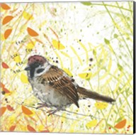 Tree Sparrow Fine-Art Print