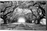 Oak Alley inf CHECK!!!!! Fine-Art Print