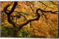 Portland Japanese Garden Fine-Art Print