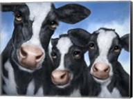 Cows Fine-Art Print