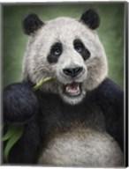 Panda Totem Fine-Art Print