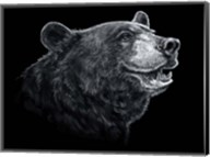 Black White Black Bear Fine-Art Print
