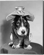 Bassett Hound Dog With Ice Pack On Head Fine-Art Print