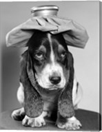 Bassett Hound Dog With Ice Pack On Head Fine-Art Print