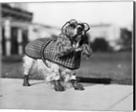 1930s Cocker Spaniel Wearing Glasses Fine-Art Print