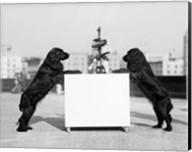 1930s Two Black Cocker Spaniels Standing Fine-Art Print