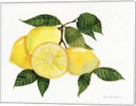 Citrus Garden VI Fine-Art Print