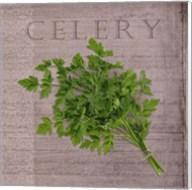 Classic Herbs Celery Fine-Art Print