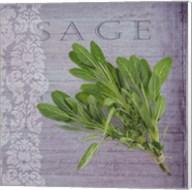 Classic Herbs Sage Fine-Art Print