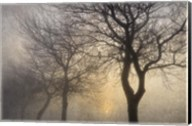 Mystic Trees with Owl Fine-Art Print