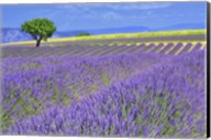 Lavender Fields with Tree Fine-Art Print