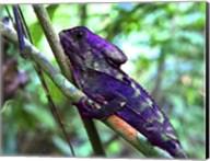 Purple Iguana Fine-Art Print