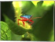 Stink Bug Fine-Art Print