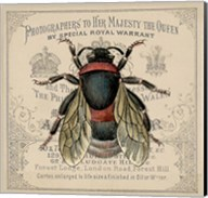 Red Bee Fine-Art Print
