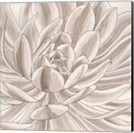 Desert Succulent I Fine-Art Print