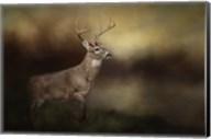 Streamside Buck Fine-Art Print