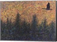 Solitary Goose Fine-Art Print