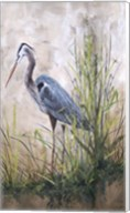 In The Reeds - Blue Heron - B Fine-Art Print
