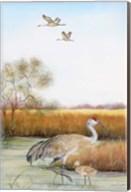 Sandhill Cranes - B Fine-Art Print