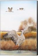 Sandhill Cranes - C Fine-Art Print