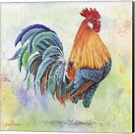 Watercolor Rooster - B Fine-Art Print