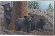 Black Bear Cub Trio Fine-Art Print