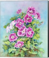 Hot Pink Blush Geraniums Fine-Art Print
