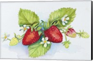 Strawberry Patch - F. Berry Border Fine-Art Print