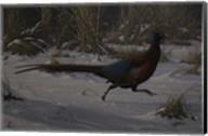 Strauch Pheasant Fine-Art Print