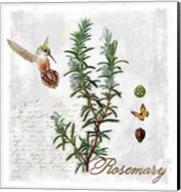 Botanical Garden Rosemary Herb Fine-Art Print