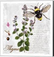 Botanical Garden Thyme Herb Fine-Art Print
