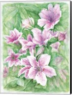 Pink Azaleas Watercolor Fine-Art Print