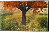 Nature Color Fine-Art Print