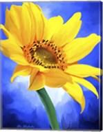 Sun Flower Fine-Art Print
