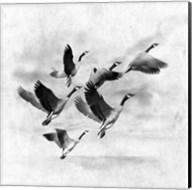 Birds Fly Away 2 Fine-Art Print