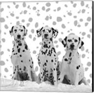 Dalmatian Fine-Art Print