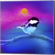 Bird Collection 8 Fine-Art Print