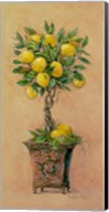 Potted Lemons Fine-Art Print